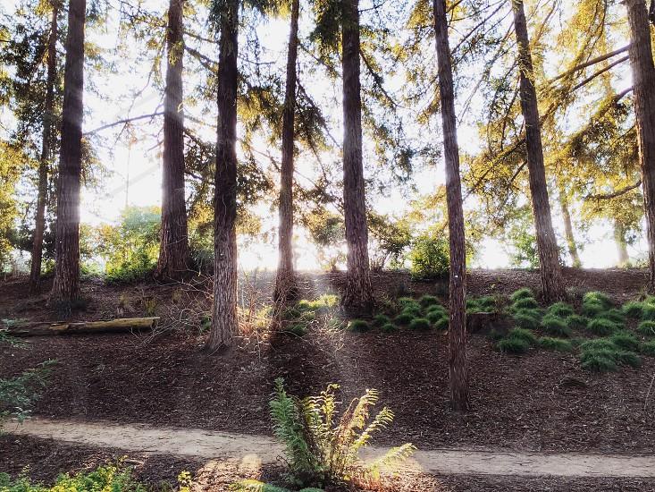 sun shining through trees on a fern photo