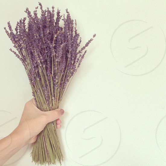 person holding bunch of vitex flower photo