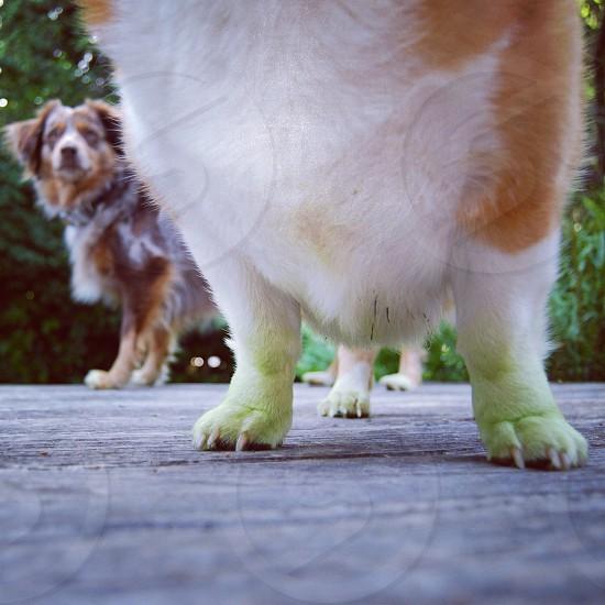 Green feet.  photo