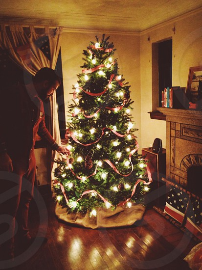 green christmas tree photo