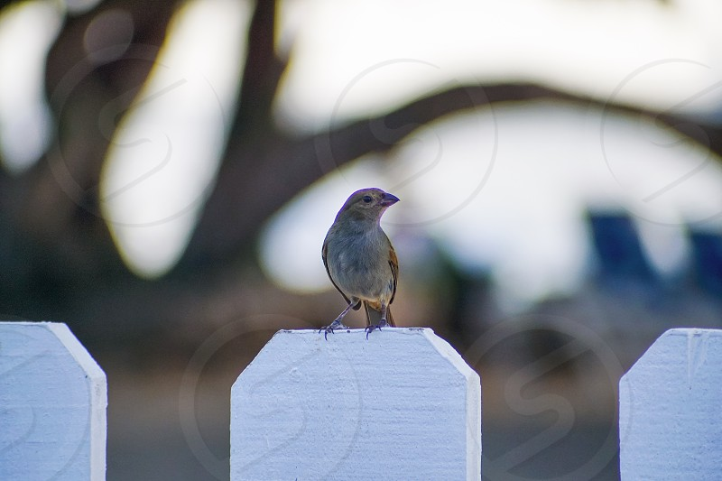 tilt shift photography of house sparrow on white fence photo