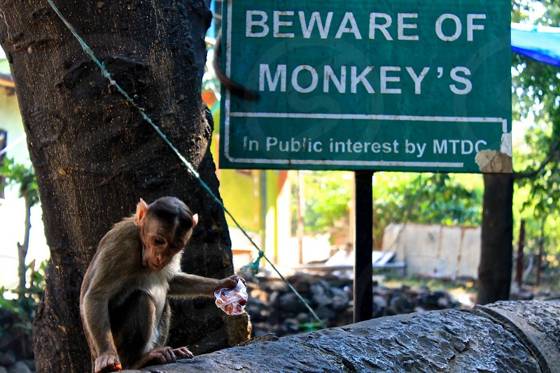 India mumbai Elephanta Island beware of monkeys adventure photo