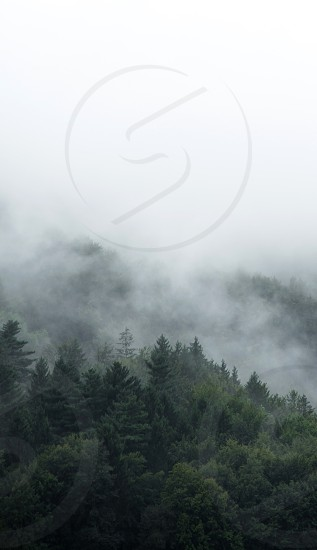 Mist above mixed forest after rain. photo
