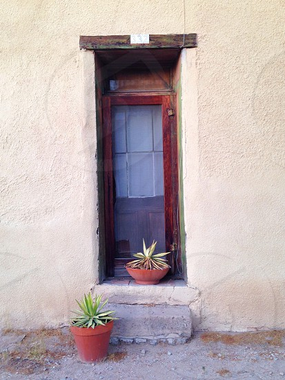 brown potted green plant near the door photo