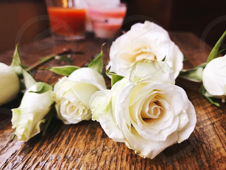 Valentine's Day roses flowers photo