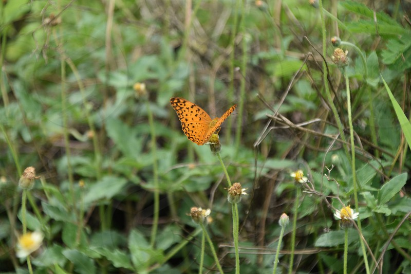 leapord butterfly nature trail blur photography Flowers photo