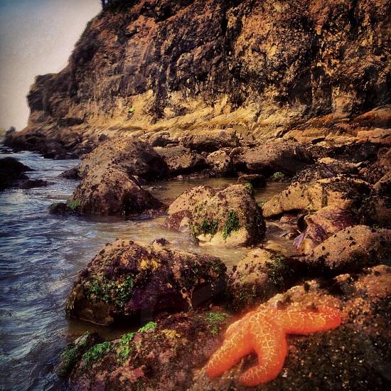 Washington Coast photo