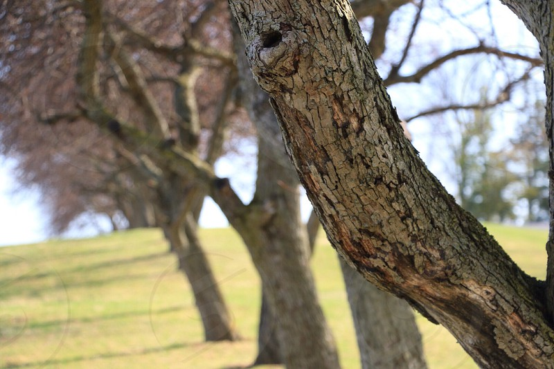 brown tree trunks on green grass field during daytime photo