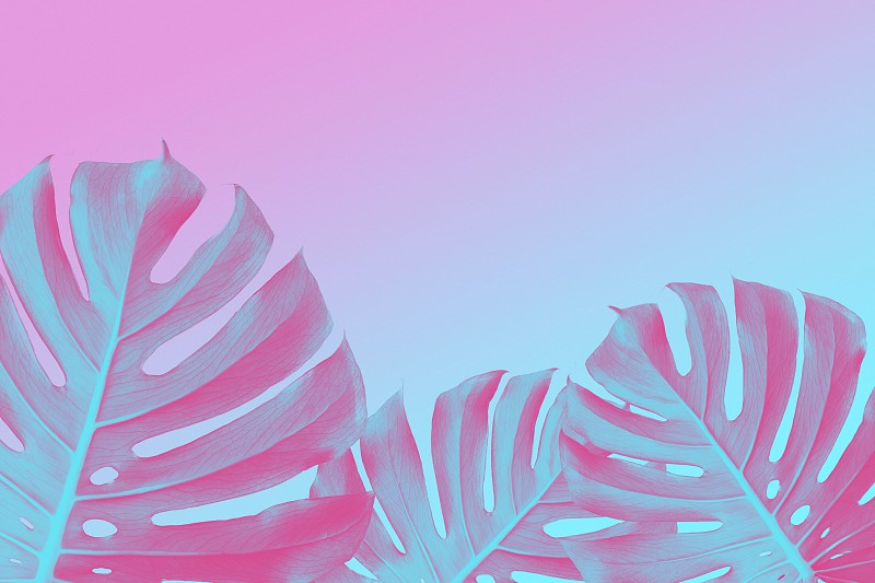 trendy design Border of tropical Split Leafs Philodendron plants on ultra violet pink and blue duotone background with copy space flat lay photo