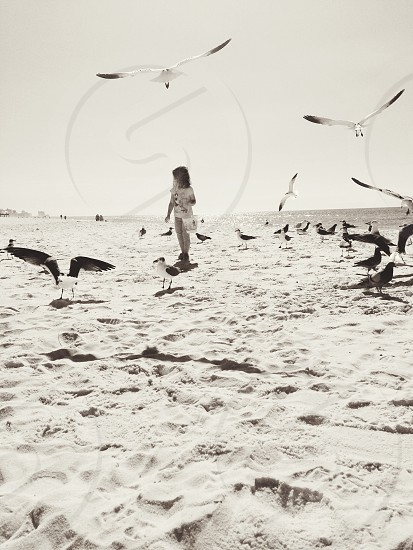 Little girl feeding the gulls in PCB Florida  photo