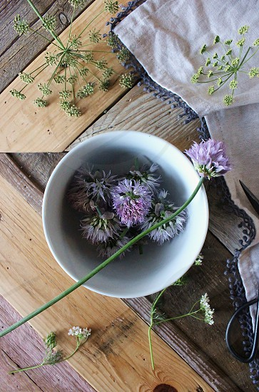 Chive & parsley blossoms. photo