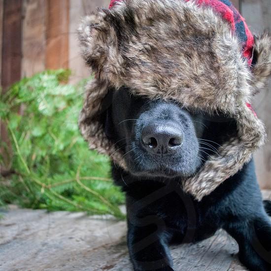 black dog animal photography photo