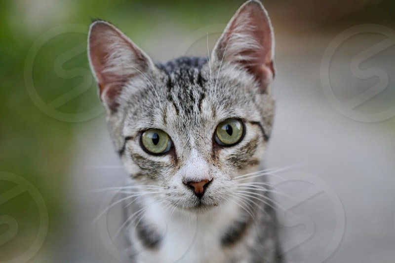 Cat animal green eyes pet cute domestic portrait  photo