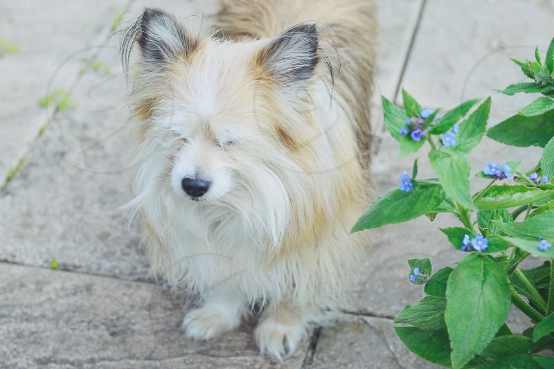 pet dog fluffy fuzzy soft hair fur puppy animal photo
