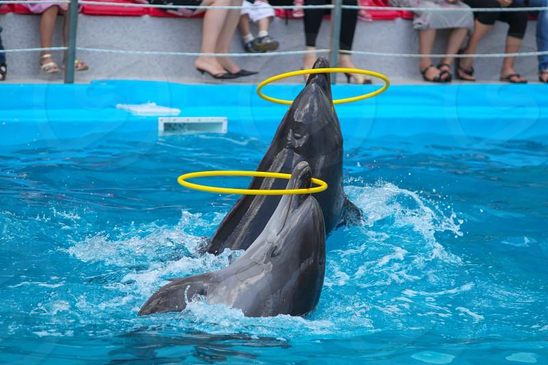 Dolphinarium photo