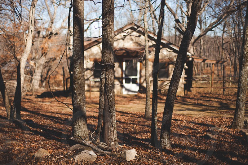 Nature adventure cabin travel forest trees  photo