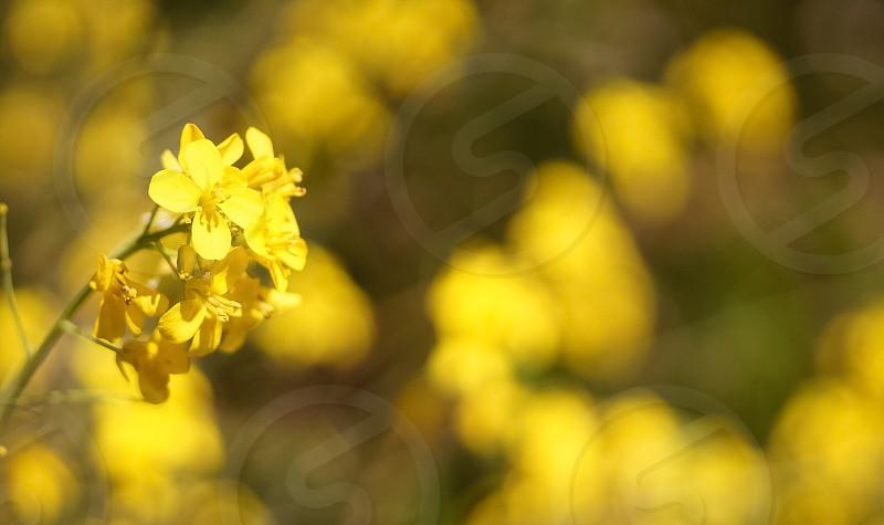 Plants yellow  photo