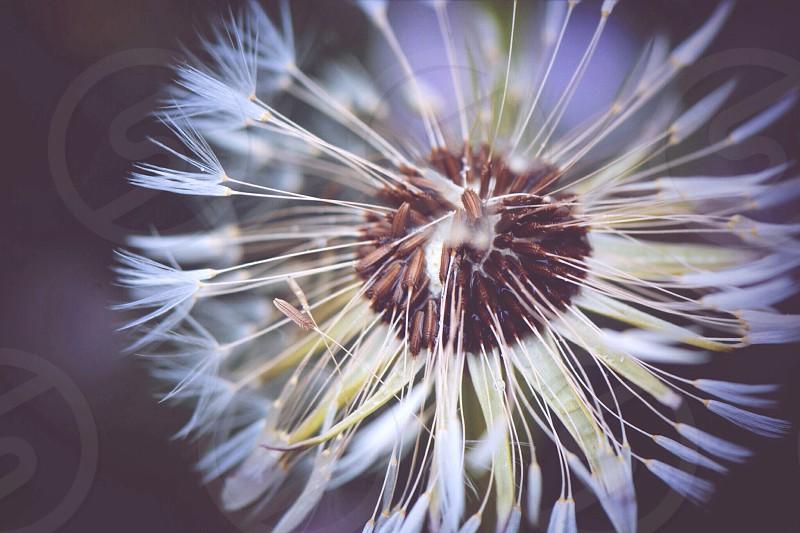 white flower photography photo