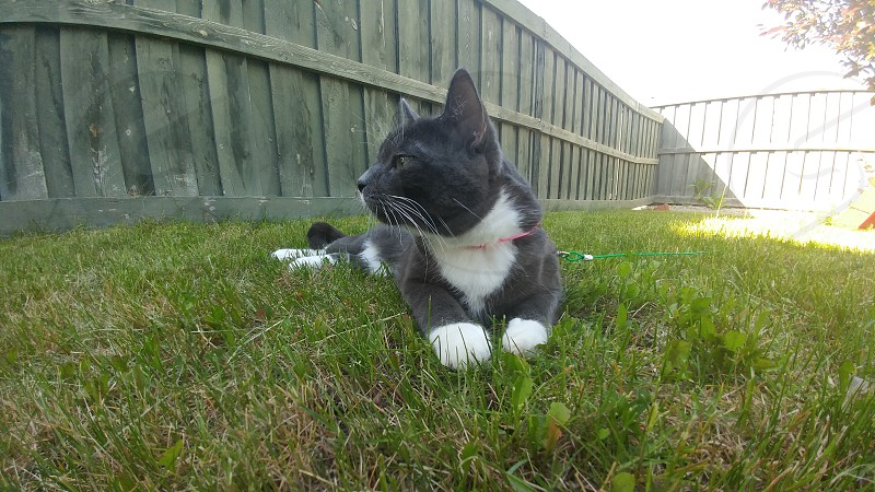 Outside Playing pets adorable cats backyard Summer Relaxing Home photo