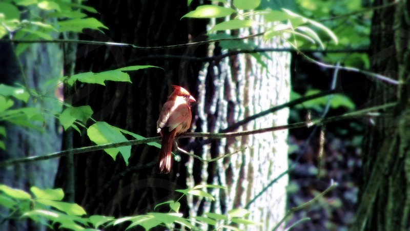 A red robin with a single streak of sunlight going across its face. Pretty cool. photo