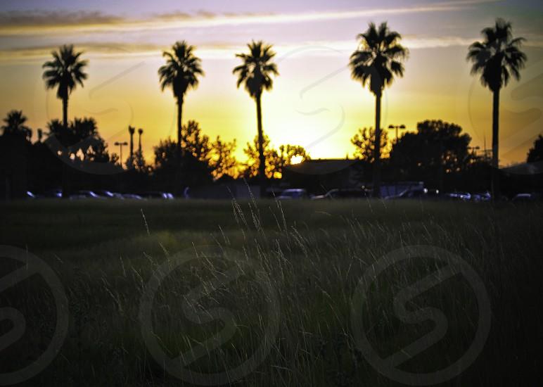 grass field sunset view photo