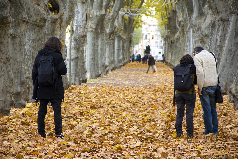 Tourists with backpacks stand on the autumn alley strewn with yellow fallen leaves and search for a route in the navigator photo