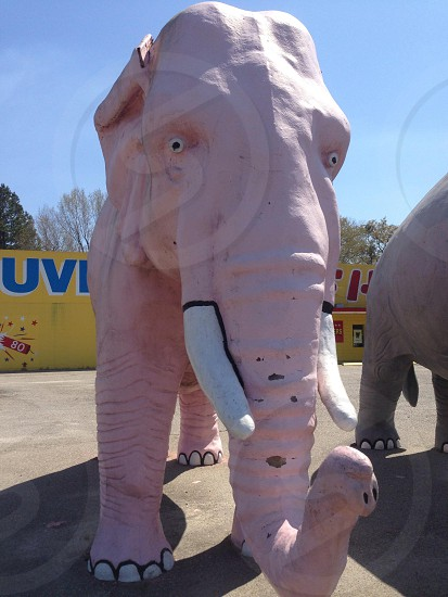 Hello mr pink elephant!  photo