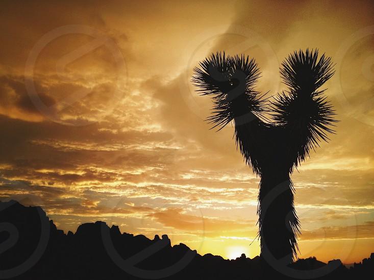tree silhouette photography photo