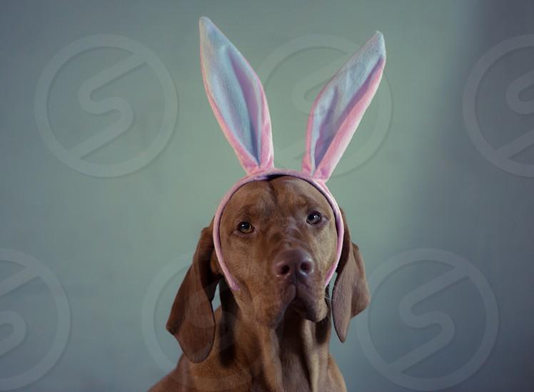 Oh nooo! dogselfieeaster earsbunnyfunny photo