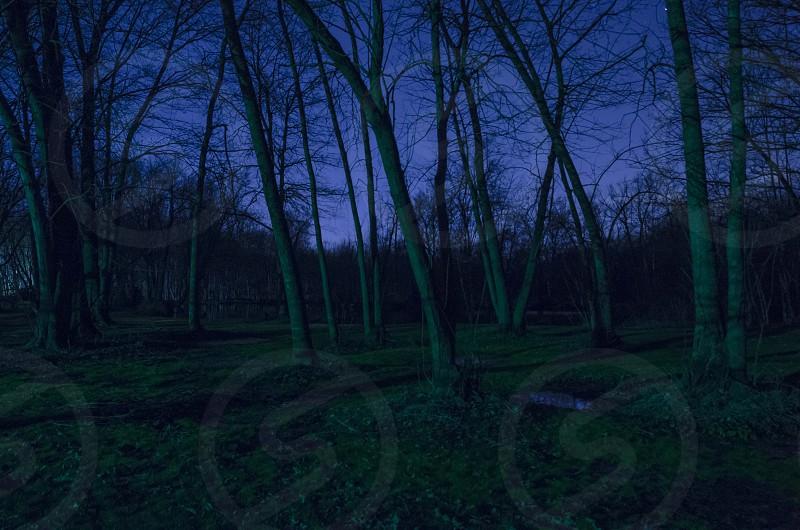 Night Swamp photo