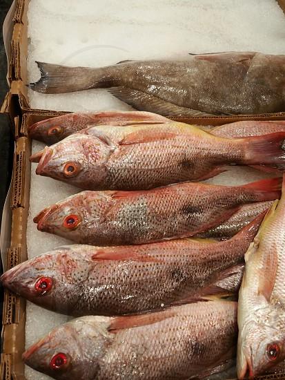 something smells fishy   fishes   fish market photo