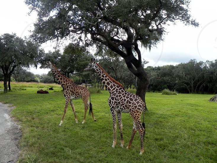exotic wildlife photo