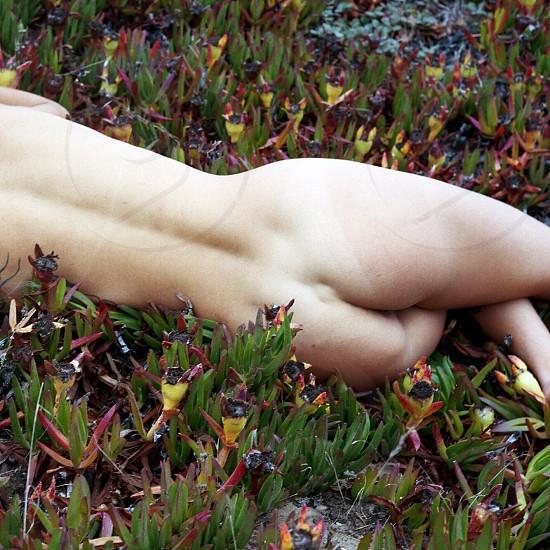 Fine art nude green nature  photo