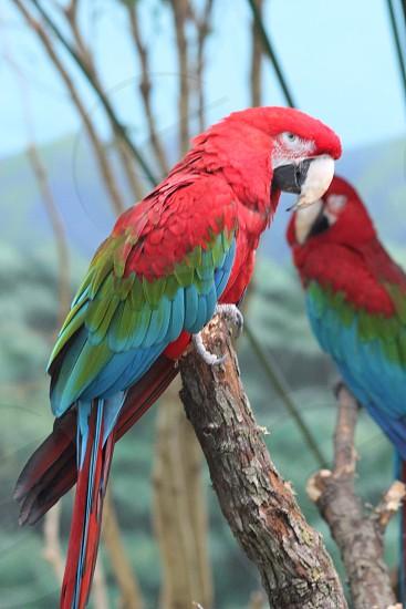 Colors animals wildlife birds mountains rainbow trees photo