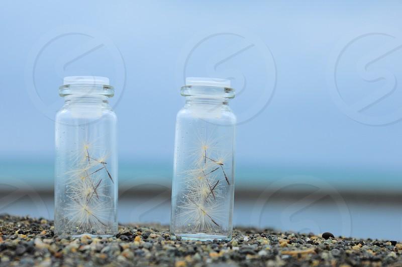 dandelion flowers in clear glass jars on rocks photo