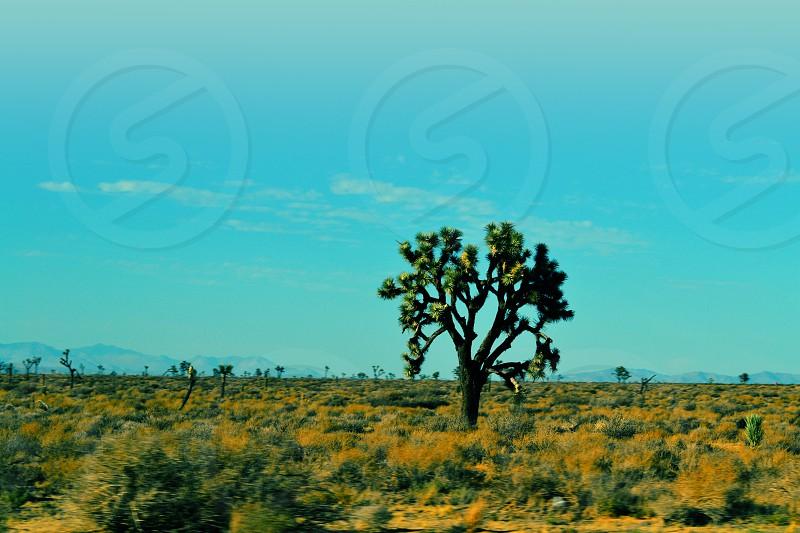 Joshua Tree Landscape US Roadtrip photo