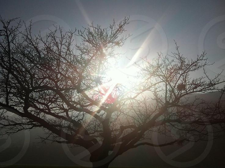 tree light photo