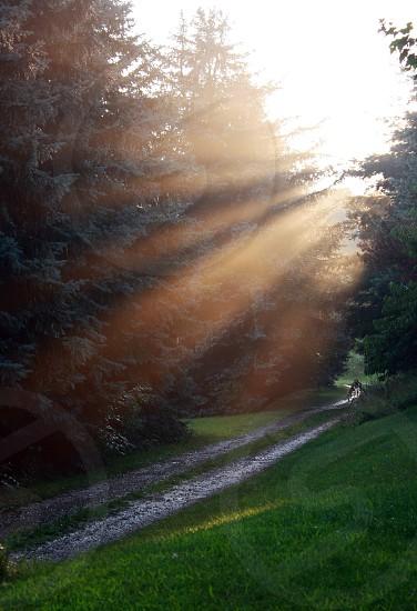 beams light dusk path drive way gravel road photo