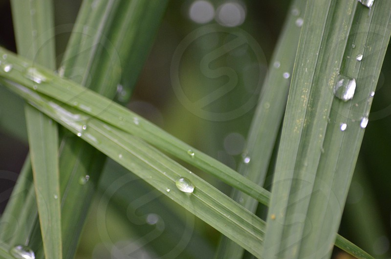 Blades of grass and water droplets Oregon photo