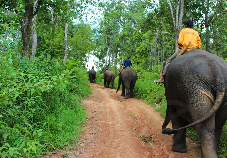 Riding Elephants in Laos photo