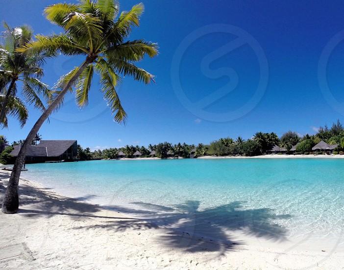 Palm over private lagoon photo