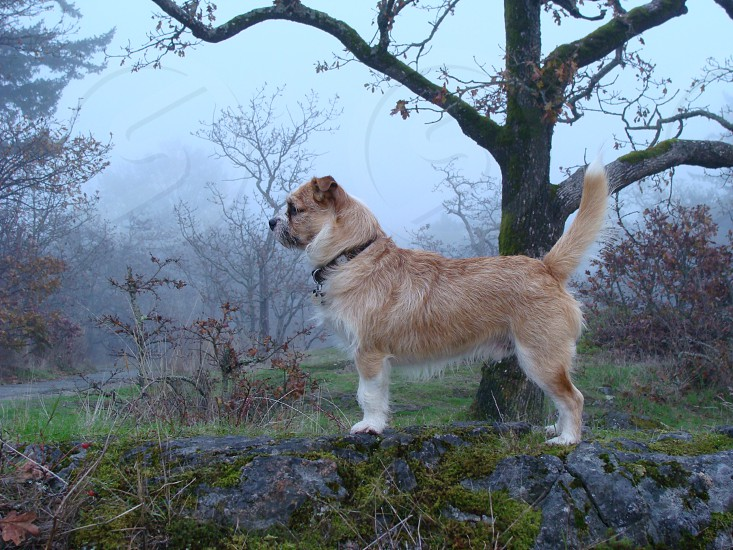 """""""Buster's Mighty Hunter"""" in fog pose  photo"""