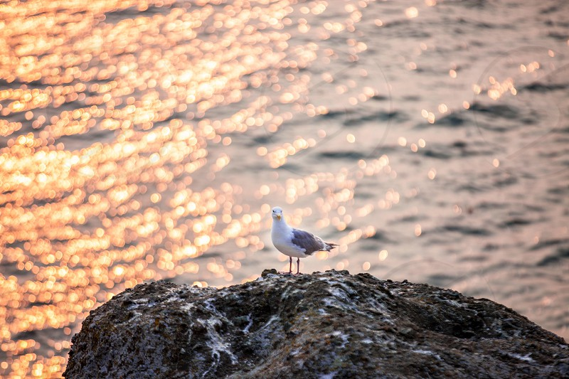 selective photography of herring gull on rock photo