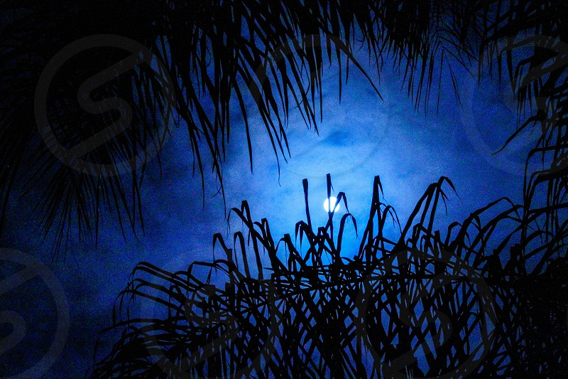 full moon scenery during night time photo