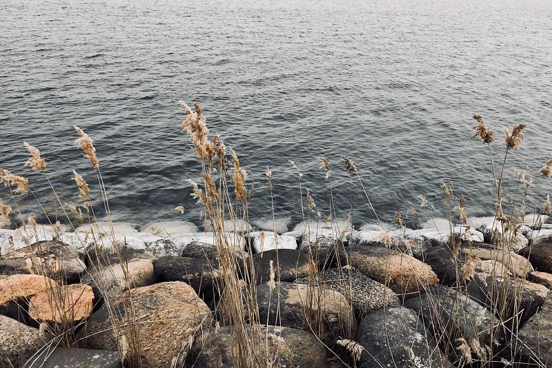 Rocky gulf shore  photo