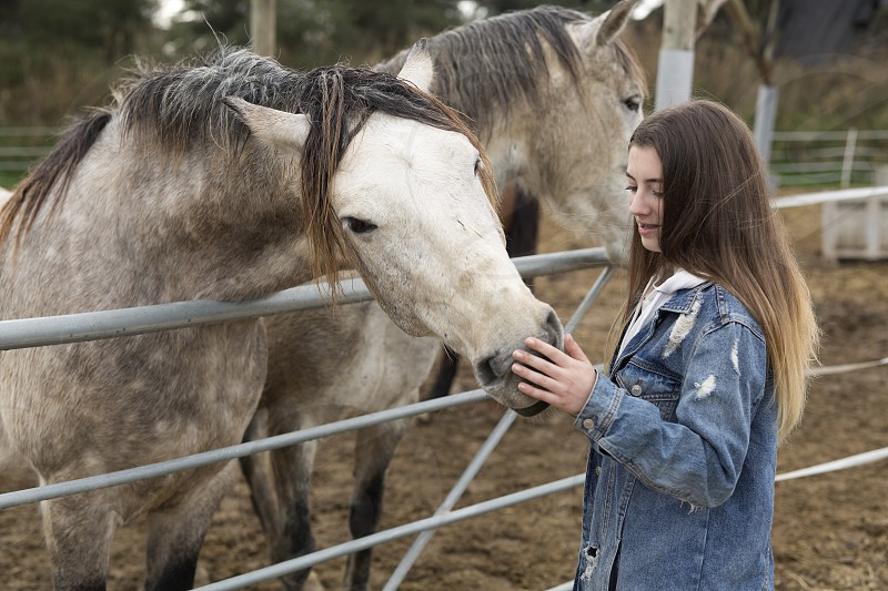 Young woman giving affection to some horses in a refuge of the province of Alicante in Spain. photo
