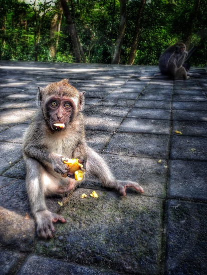Monkey Temple photo
