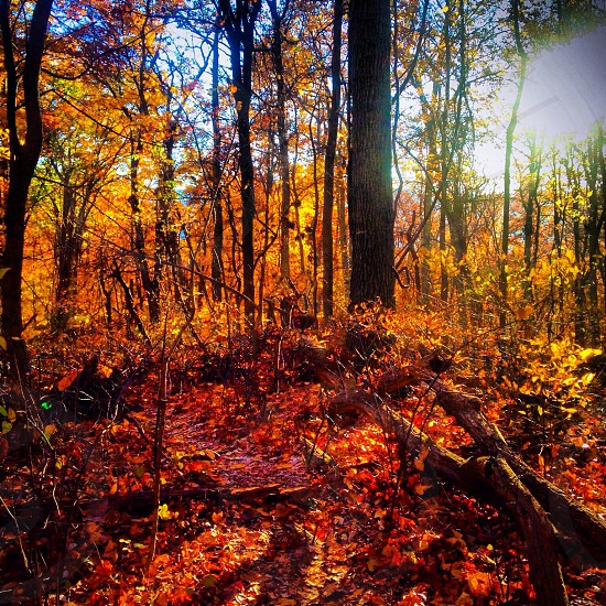 woods in the autumn photo