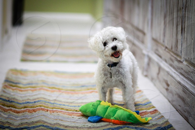 Dog cute portrait photo