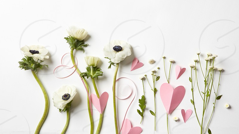 Beautiful flowers and pink hearts on a white background. Postcard to Valentine's Day photo